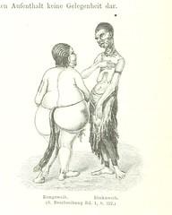 """British Library digitised image from page 156 of """"Im Herzen von Afrika. Reisen und Entdeckungen im centralen Aequatorial-Afrika während der Jahre 1868 bis 1871 ... Deutsche Originalausgabe, etc"""""""