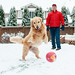 Merry Christmas, everyone! by Brady the Golden Retriever