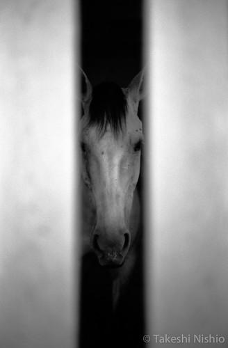 神馬 / sacred horse