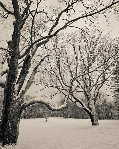 trees blackandwhite snow plenty odc tamron1024mmlens