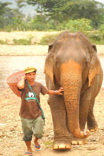 Elephant Nature Park 12