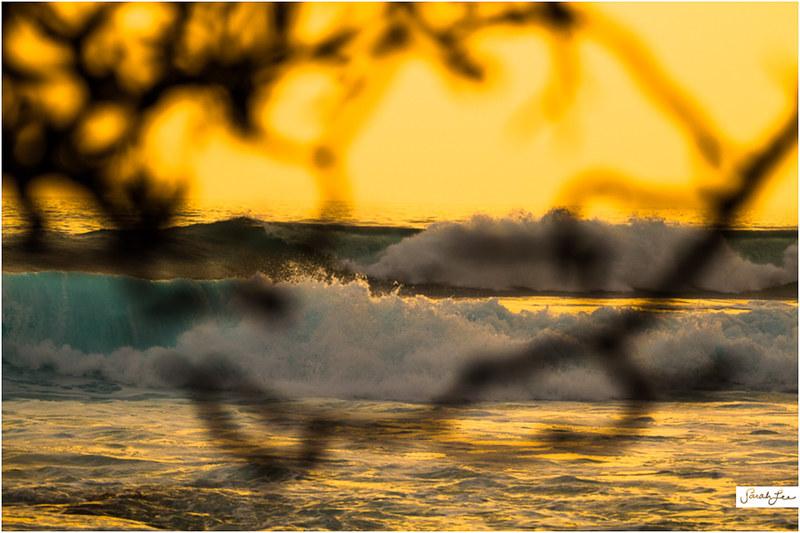 5_Kona_Banyans_Swell_Surf.jpg