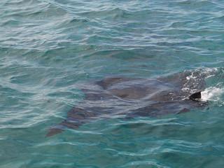 Majestetische Mantarochen... Leider hatten wir keine Unterwasserkamera dabei um sie beim Schnorcheln zu fotografieren