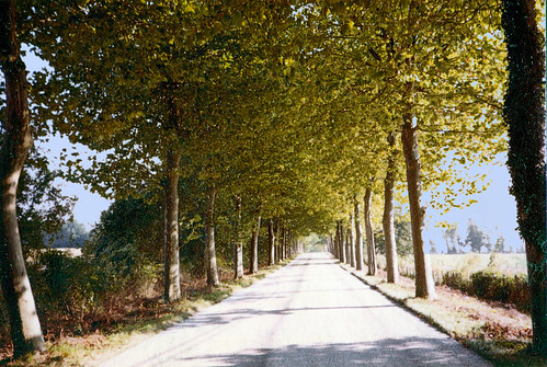 Nature's Cloister - Between Bourg-en-Bresse and Perouges