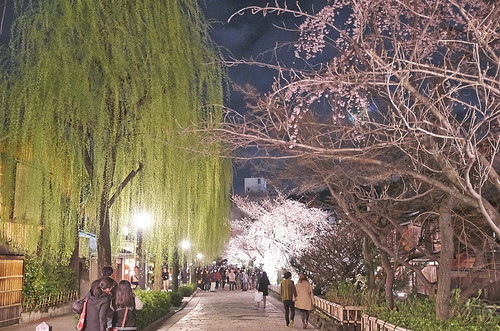 【写真】2014 桜 : 祇園白川/2020-09-13/IMGP5574