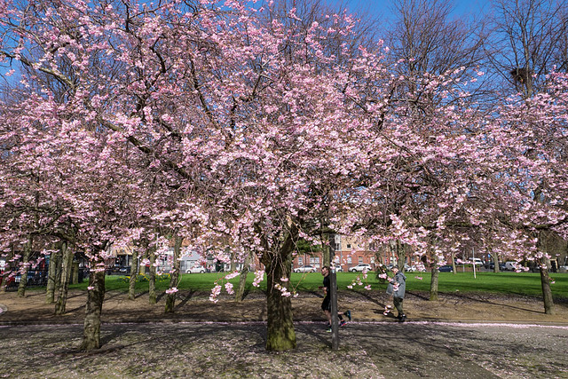 Glasgow Spring