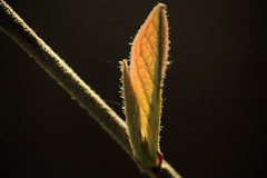 Junge Blätter (01)