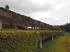 george hunt walker weyerhaeuser building #latergram #juniper #juniperanddaddy #juniperisseven #georgehuntwalkerweyerheyueser