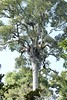 Martial Eagle Nest