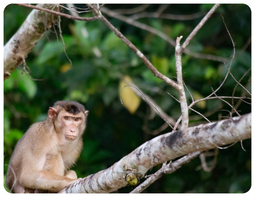 Borneo-20170411-IMG_7526