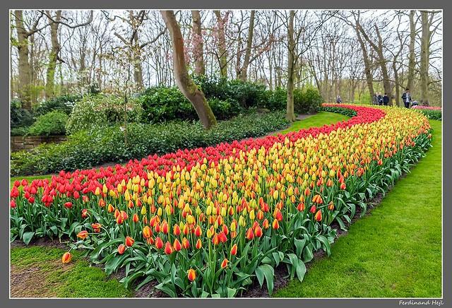 Netherlands_Keukenhof
