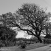 Small photo of Prevailing wind