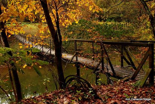 Swinging Bridge in Wendover, KY