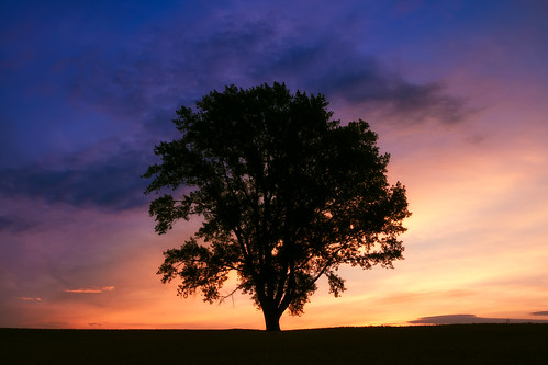 morning summer tree beautiful silhouette japan clouds sunrise colorful hokkaido biei hokkaidoprefecture arcreyes kamikawadistrict philosophertree