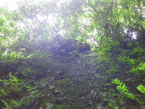 Fern Canyon 7