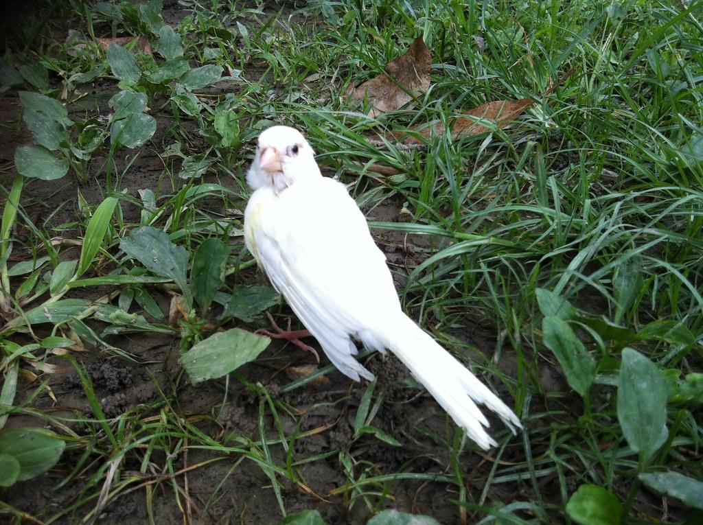 請教這是甚麼鳥啊?