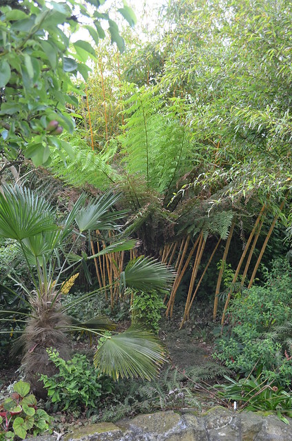 Hardy tropicals uk view topic growing plants on tree fern trunk - Flowers that grow on tree trunks ...