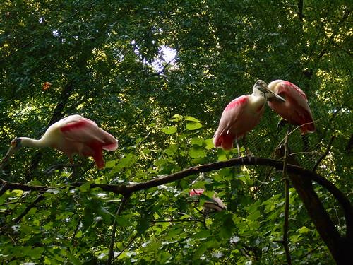 pink bird (2)