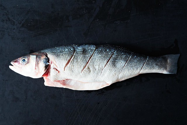 Slashes in fish