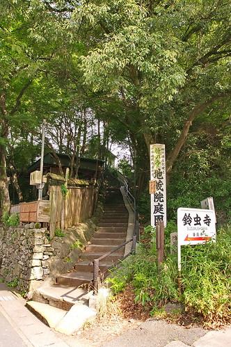 【写真】2013 青葉 : 地蔵院/2021-07-28/IMGP0975