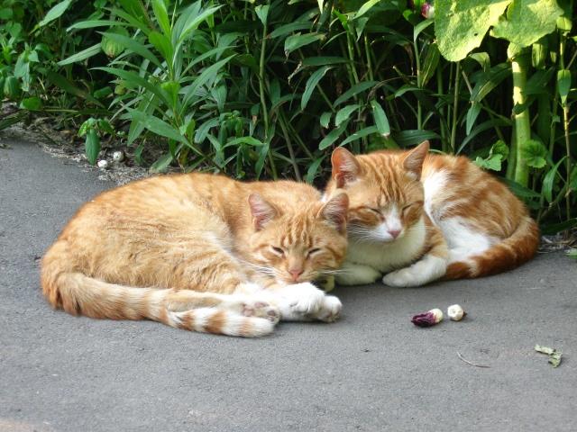Коты-друзья