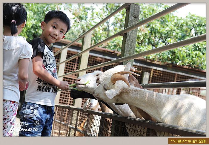 益健羊乳場26
