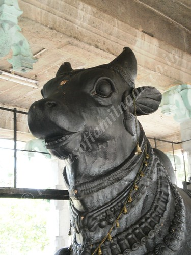 Nandi at Thirupungur