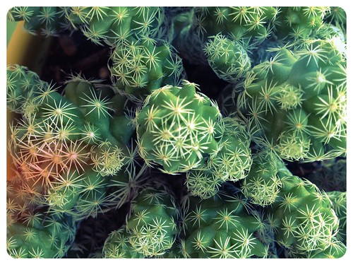 Baby Cactus by Digital Heather