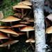 Mushroom Tableau by peterkelly