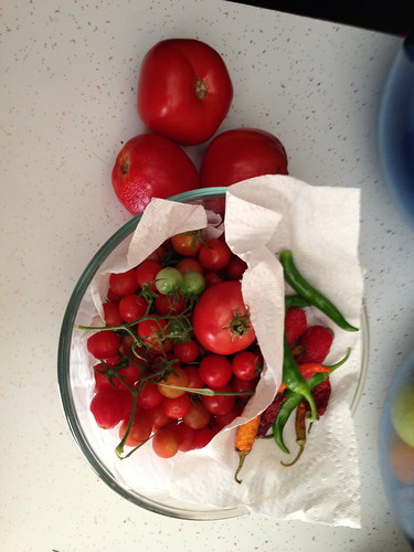 Harvest from the garden