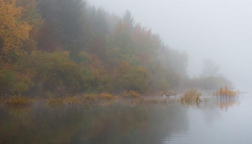 morning autumn fall fog landscape geotagged deer slovenia slovenija jesen jutro megla srna cerknicalake cerkniškojezero