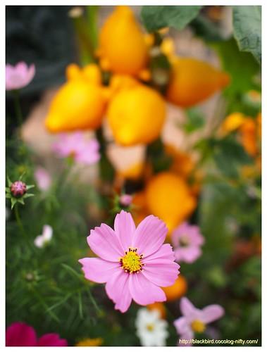 Flowers # 03