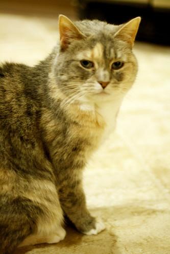 [235/365] Grumpy Cat