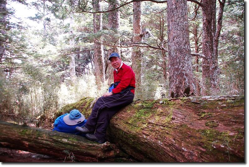 磐石山前倒木營地