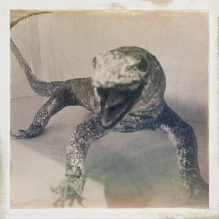 Taxidermied Monitor Lizard