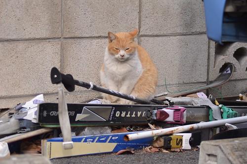 cats_2013-12-09_7