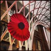 Remembering the fallen #RememberenceDay #kingscross #poppy #architecture by Impa88