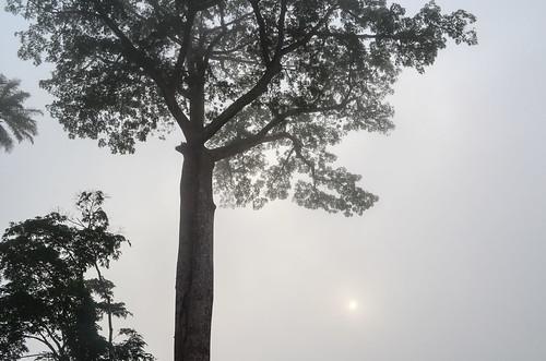 africa bicycle day417 fog gabon mist freewheelycom cycling vélo cycletouring cyclotourisme velo jbcyclingafrica