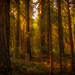 Enchanted Forest by Ping...