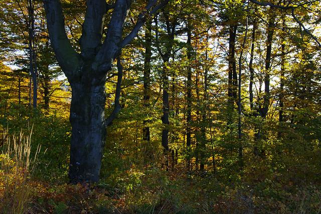 Through autumn woods to Velký Stožek