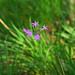 Flower at f5.6 por Daniel Orta