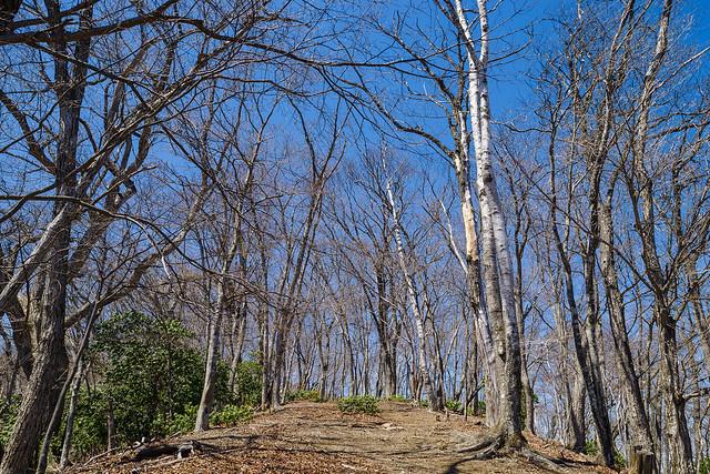 美しい木々が茂るウノタワへの稜線
