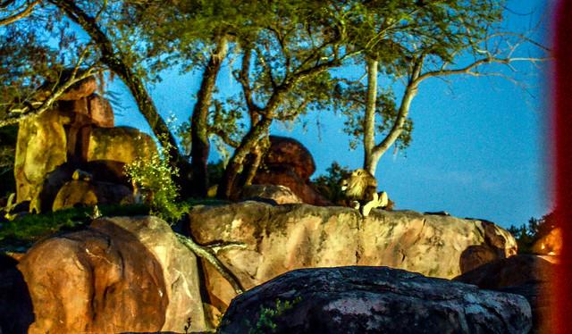 Lion night safari AK