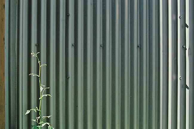 janice_wong_corrugate_plant
