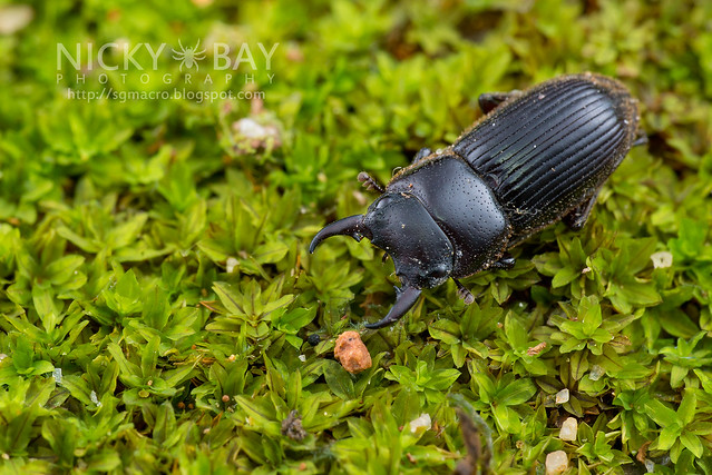 Stag Beetle (Lucanidae) - DSC_4692