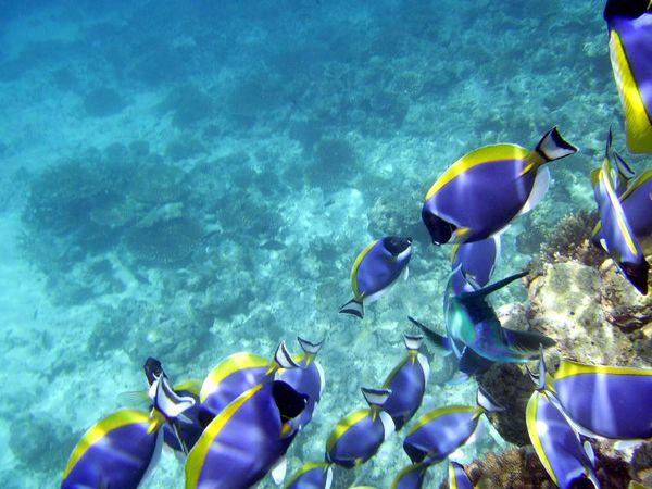 ocean pollution research topics