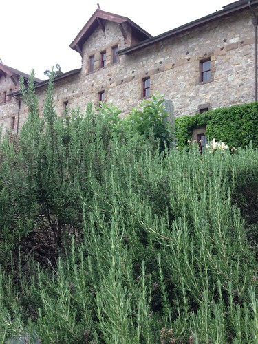 Culinary Institute of America at Greystone. Look at all that rosemary.