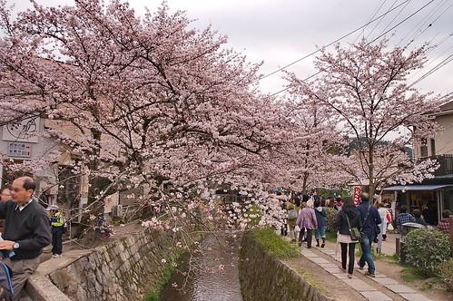【写真】2013 桜 : 哲学の道/2018-12-24/IMGP9246