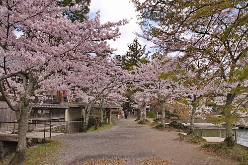 【写真】2013 桜 : 大覚寺/2020-09-15/IMGP9420