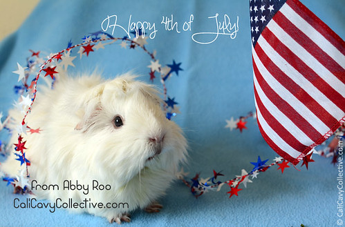 Fireworks safety tips for your guinea pigs